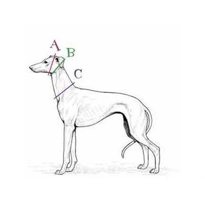 How to measure your dog for a collar