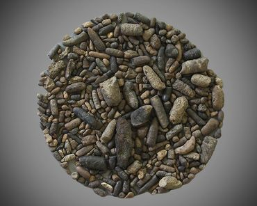 coprolite, poop, Poozeum, fossil,  paleontology,  dinosaur, dino, feces, collection