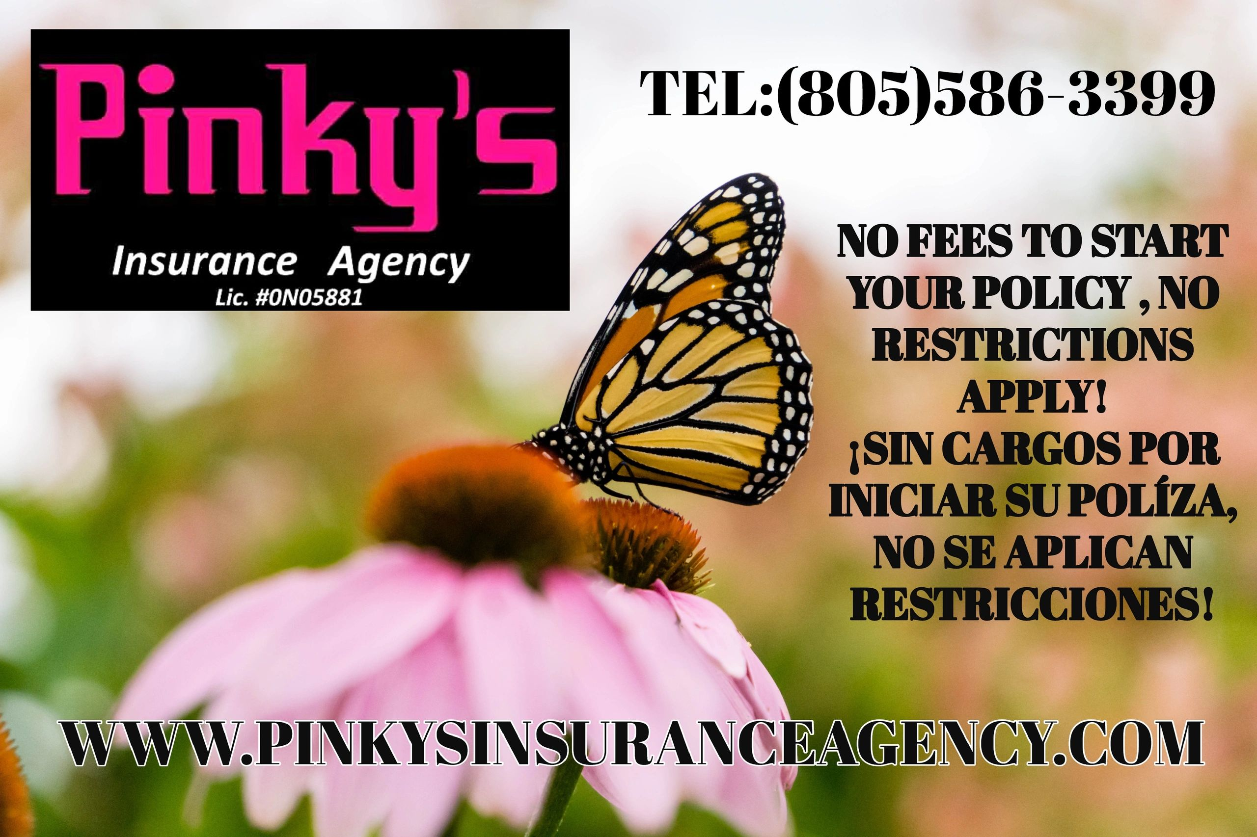 Insurance Agency , Special Offer