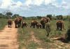 The Elephants of Kidepo Valley Park