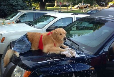 When washing your vehicle make it a family event and have a dog of a good time.