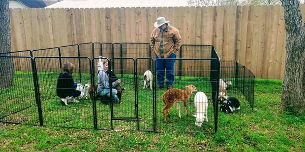 Our small petting zoo panels can be configured in any shape. They are perfect for backyard parties.