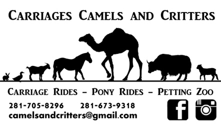 Camels and Critters