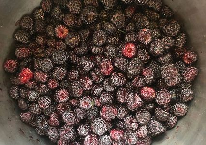 Fresh black raspberries from Gobble-Berry Farmstead.