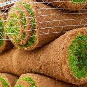 turf suppliers kent,turf for sale,lawn turf,turf prices,turf grass,buy turf,turf suppliers.