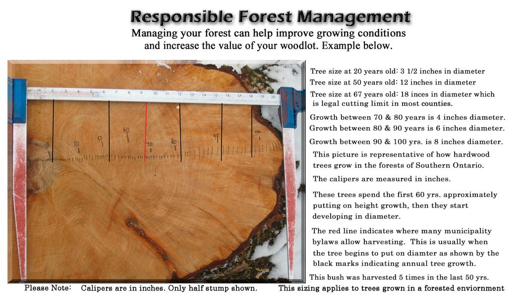Output growth from responsibly managing your woodlot.