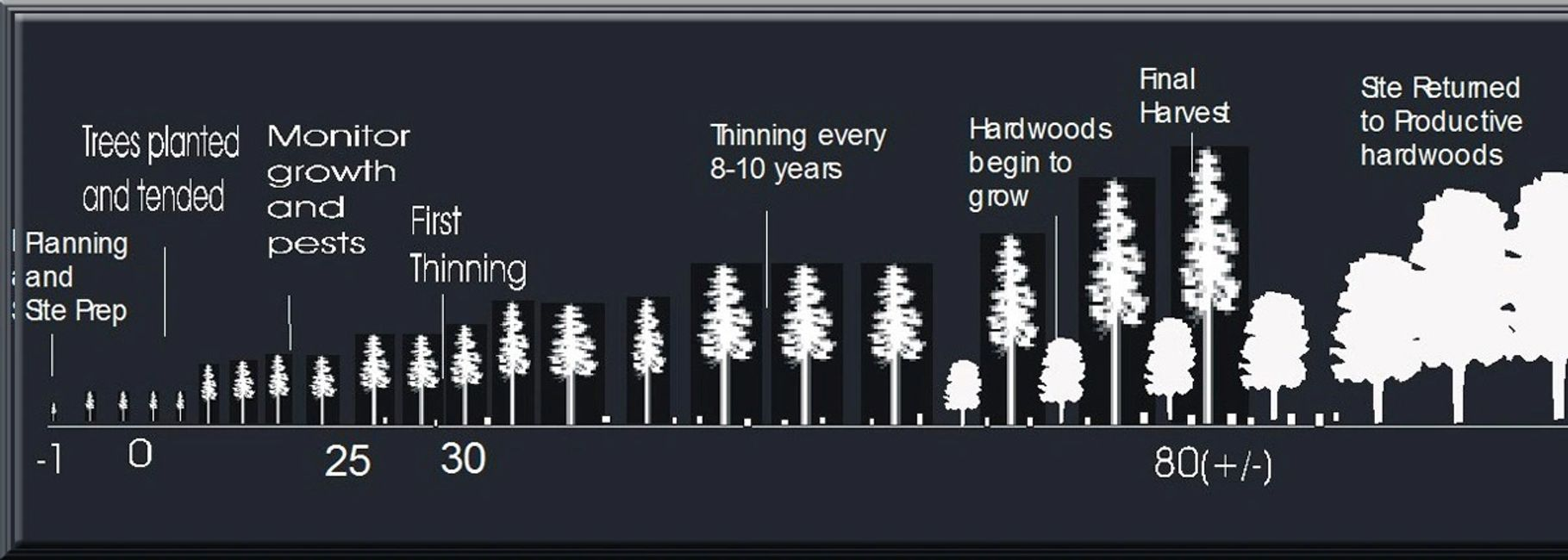 Plantation management stage growth chart with Eccles Forestry Ltd.