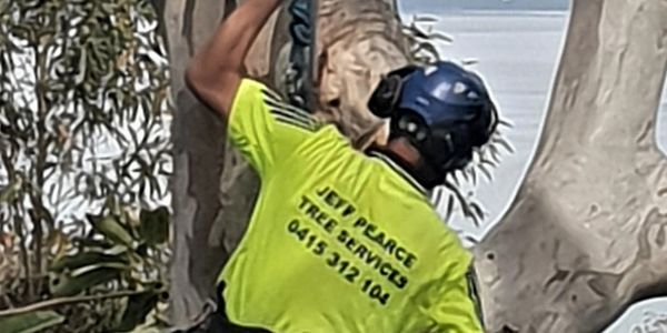 Jeff Pearce Tree Services has an experienced team of members who can undertake tree lopping, tree cutting, pruning, deadwooding and stump grinding. Land clearing is also a specialty for Jeff and his team.