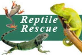 Reptile Rescue Animal Rescue Pet Rescue Reptile Birthday Party Kids Birthday Party Camp Program NJ
