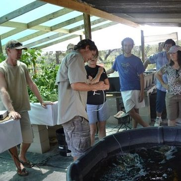Aquaponic Training and Workshops