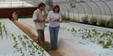 Commercial Aquaponic Consulting