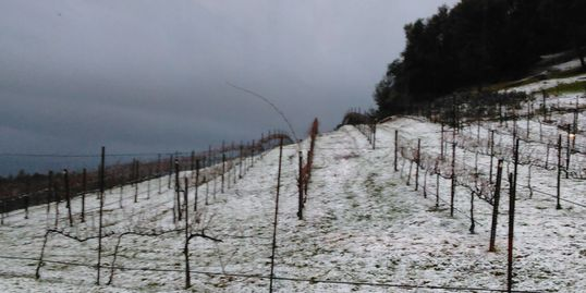 Winter in the slate Creek Hills vineyard.  Sleet- it lasted about 30 minutes.