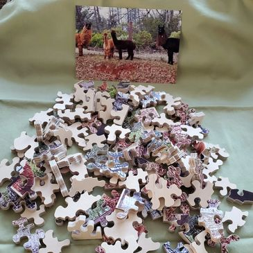 Jigsaw Puzzle of Llamas and Alpacas