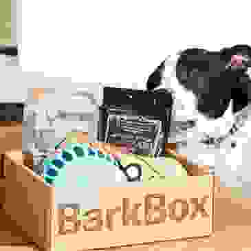 BarkBox will donate $25 to us, and you'll get your first box 50% off on a 6-12 month plan. Go Here