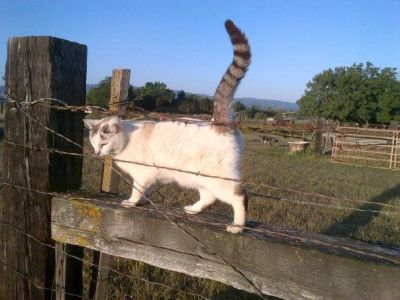 Cat standing on a fence