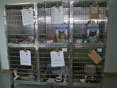 Cats in shelter cages