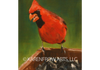 "Oil on canvas, ""Big Red"""