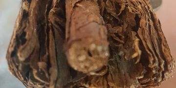 ENTOMBED Omepete cu an seed tobacco sun grown in richvolcanic soil,