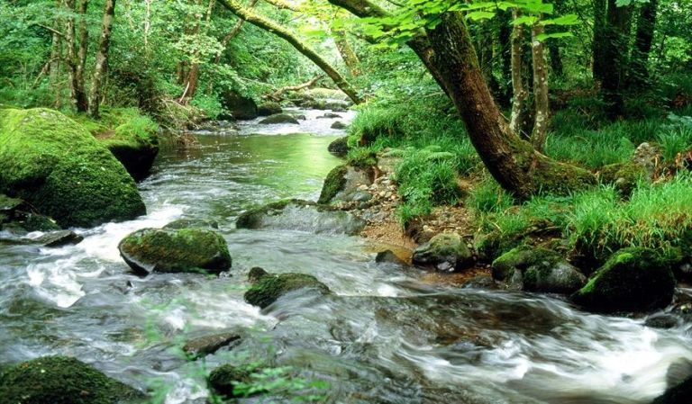 Image of a flowing river tumbling over rocks with tree lined riverbank.