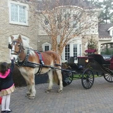 little girl petting carriage horse