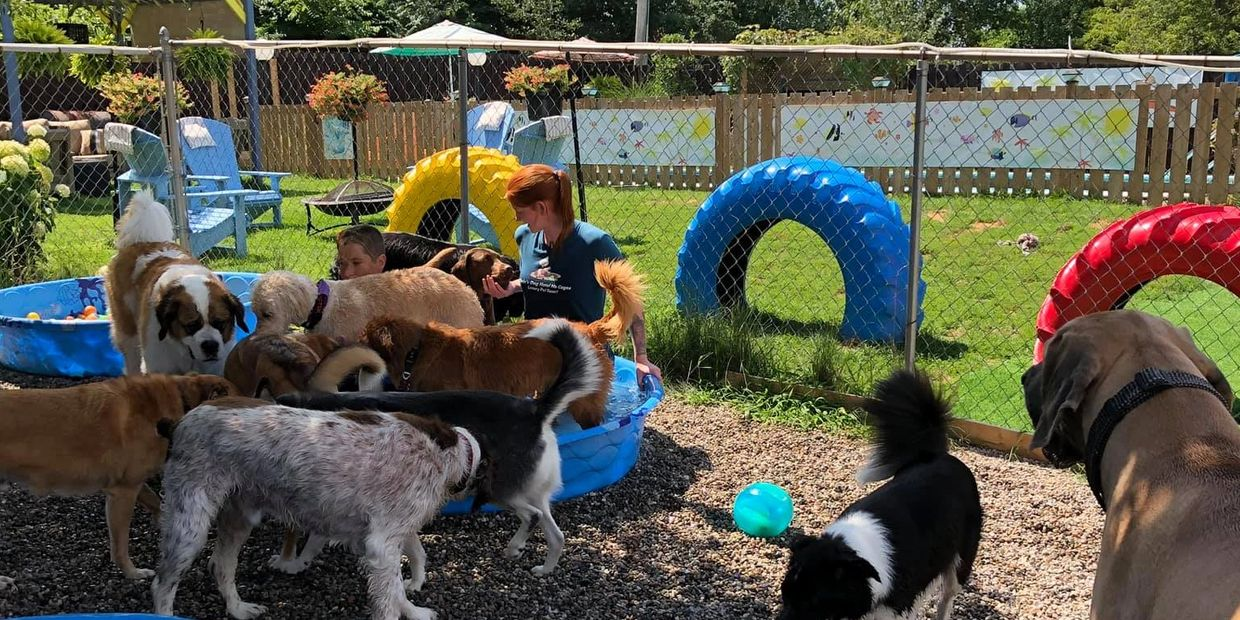 Pool Party at Chris's Dog Hotel No Cages Luxury Pet Resort in Belleville