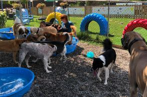 Staff playing with the puppys at Chris's Dog Hotel No Cages Luxury Pet Resort in Belleville