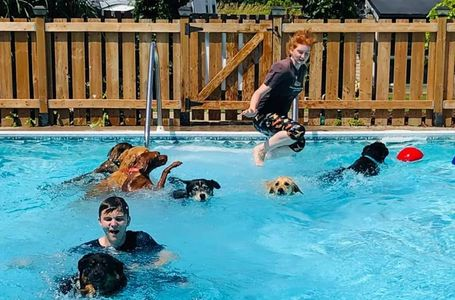 Chris's Dog Hotel No Cages Luxury Pet Resort in Belleville is having a Pool Party with the dogs.
