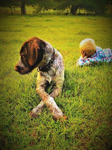 Hardwirekennels - Puppies, Bird Dog, Dogs for Sale