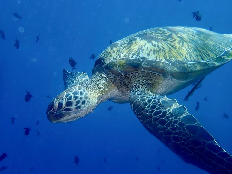 Sea Turtle seen while diving