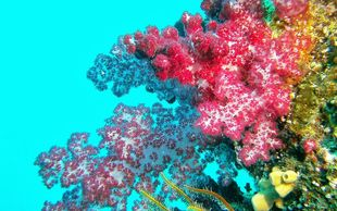 Picture of Coral Reef