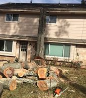 Freshly cut tree logs on yard with chainsaw Delfino's aldine tree services houston stump grinding