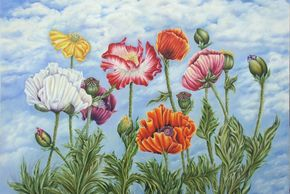 Peaceful Skies Poppies, colored pencil painting