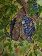 Grapes, Tuscany art, colored pencil art