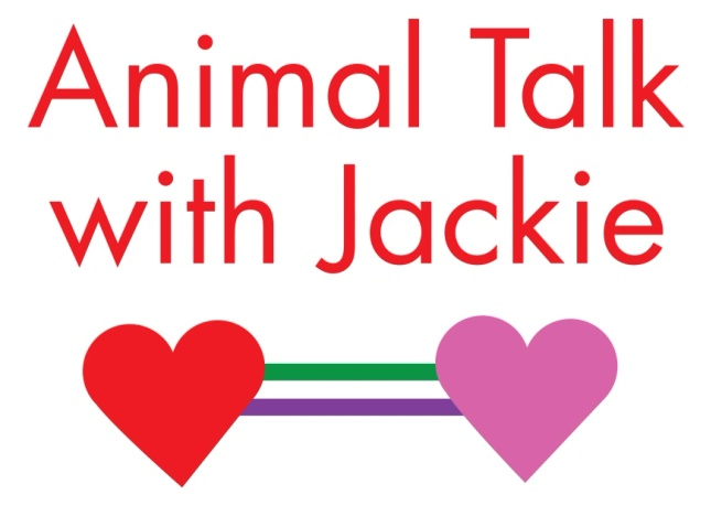 Animal Talk With Jackie