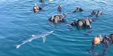 4 swimming with sharks swimming with sharks experience snorkelling with sharks diving with sharks