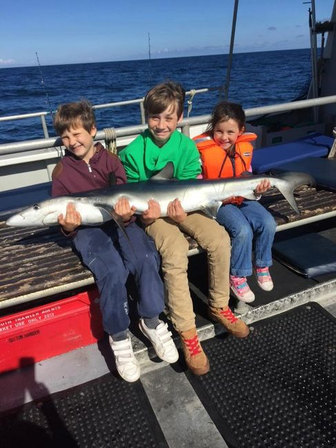 3 Children Holding a Blue Shark onboard seawatch from Mylor harbour Falmouth Cornwall shark fishing