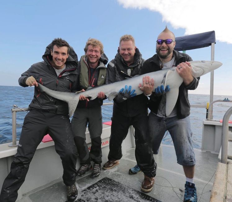 3 anglers and Nigel Hodge holding a blue shark onboard seawatch from Mylor Falmouth Cornwall sharks