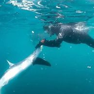 swim with sharks, tuna dolphins from Falmouth onboard seawatch Cornish charter boat Falmouth fishing