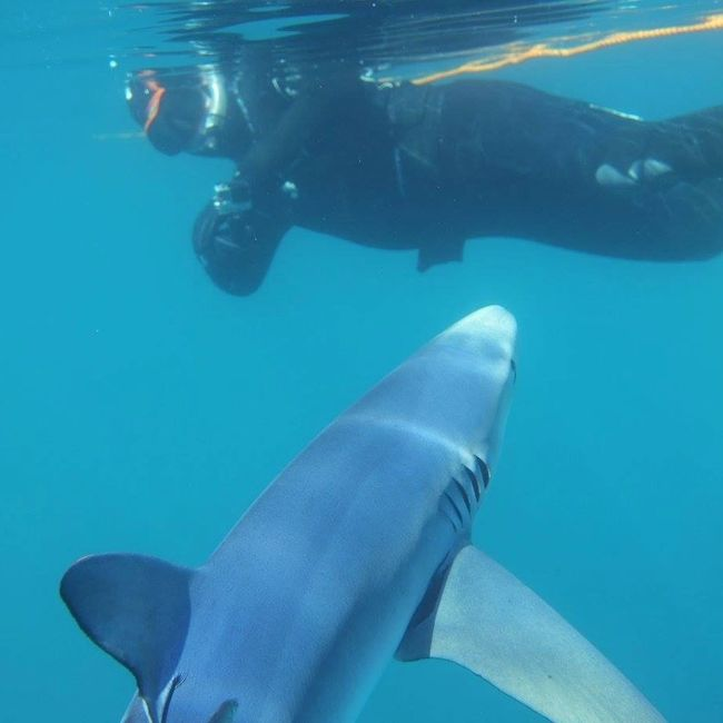 Shark diving experience Falmouth Cornwall on seawatch fishing, diving charter boat commercial
