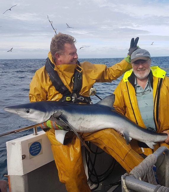 Nigel hodge with a blue shark onboard seawatch from mylor harbour Falmouth Cornwall shark fishing