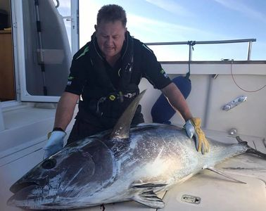 Nigel hodge tuna fishing on seawatch from Mylor harbour Falmouth Cornwall big game fishing Falmouth