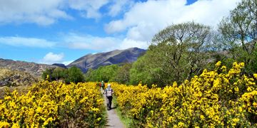 The Kerry Way near Lord Brandon's Cottage Mindful Walking Discover Ireland Wild Atlantic Way