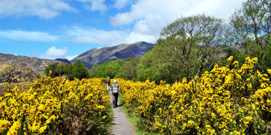 Exercise Fitness Health The Kerry Way near Lord Brandon's Cottage Mindful Walking