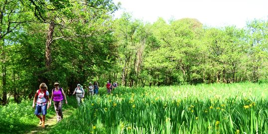 Easy guided walks in Killarney National Park County Kerry with Killarney Mindful Hiking