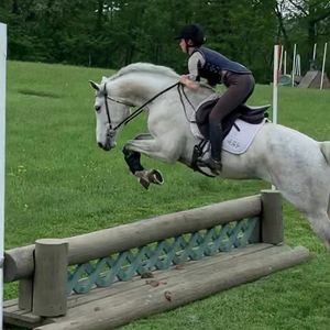 Orsted, grey 4 year old horse, jumping a fence with rider Shannon O'Hatnick