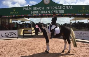 Gotham at dressage how in Palm Beach