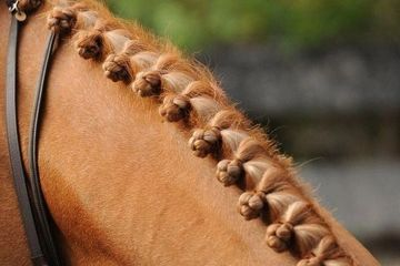 the mane of a horse braided and ready for the show ring