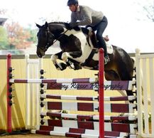 Gotham jumping a very high fence at the 70 day Stallion Test