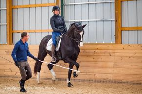 horse learning piaffe/passage