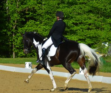 Gotham, demonstrating dressage move
